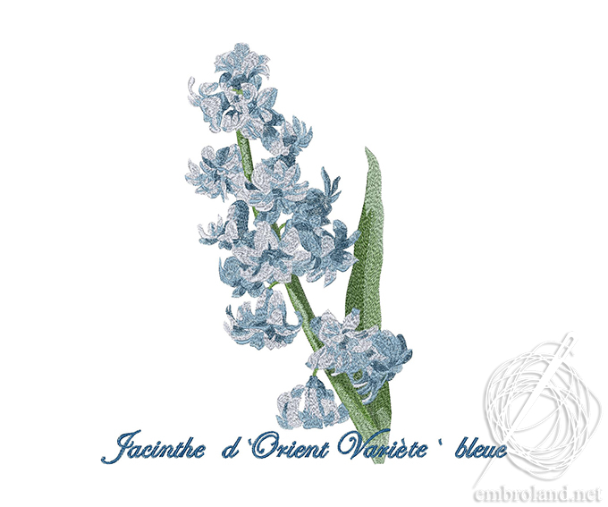 Blue Hyacinth Embroidery Design Online Shop Machine Embroidery